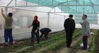 Niemcy praca w szklarni przy zbiorach warzyw Berlin 2014