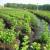Oferty sezonowej pracy w Niemczech przy sadzeniu drzewek Weener 2014